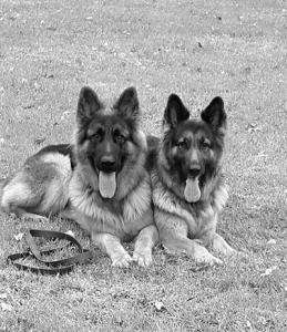 Cassie and Kaiser